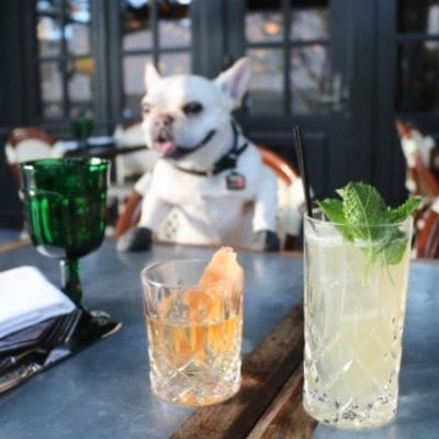 8 Dog Friendly Restaurants in DTLA