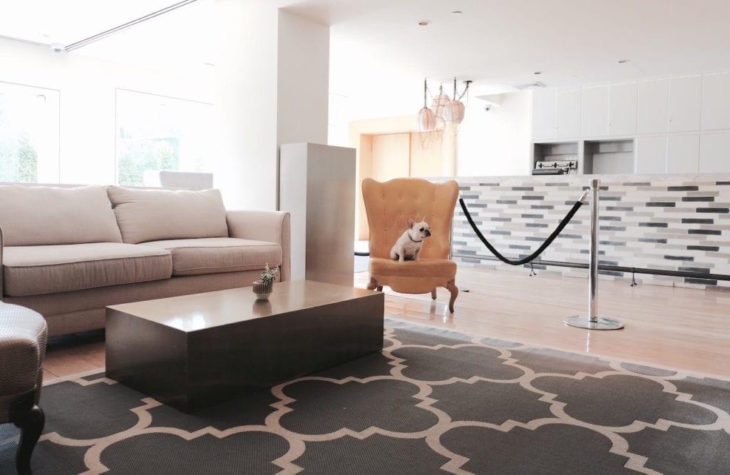 mondrian hotel dog