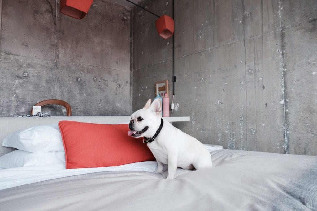 french bulldog hotel