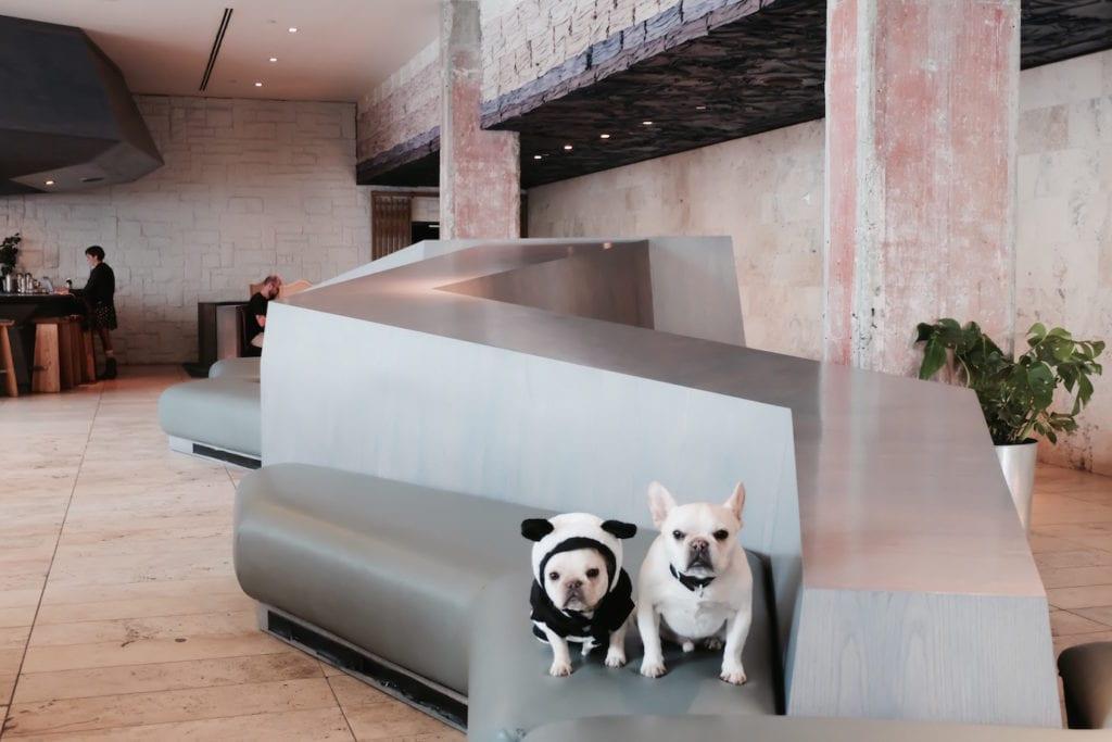 line hotel dog