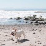 santa barbara dog friendly getaway