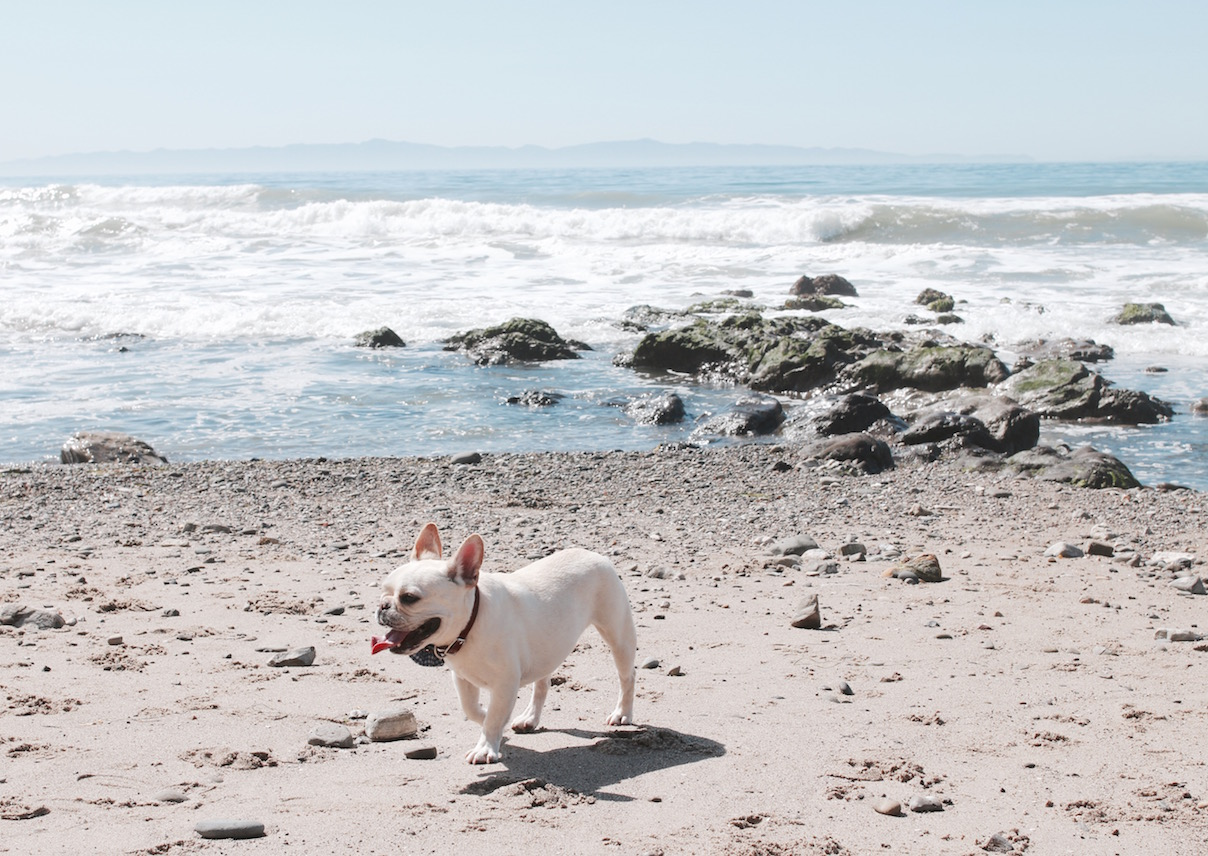 santa barbara dog friendly getaway
