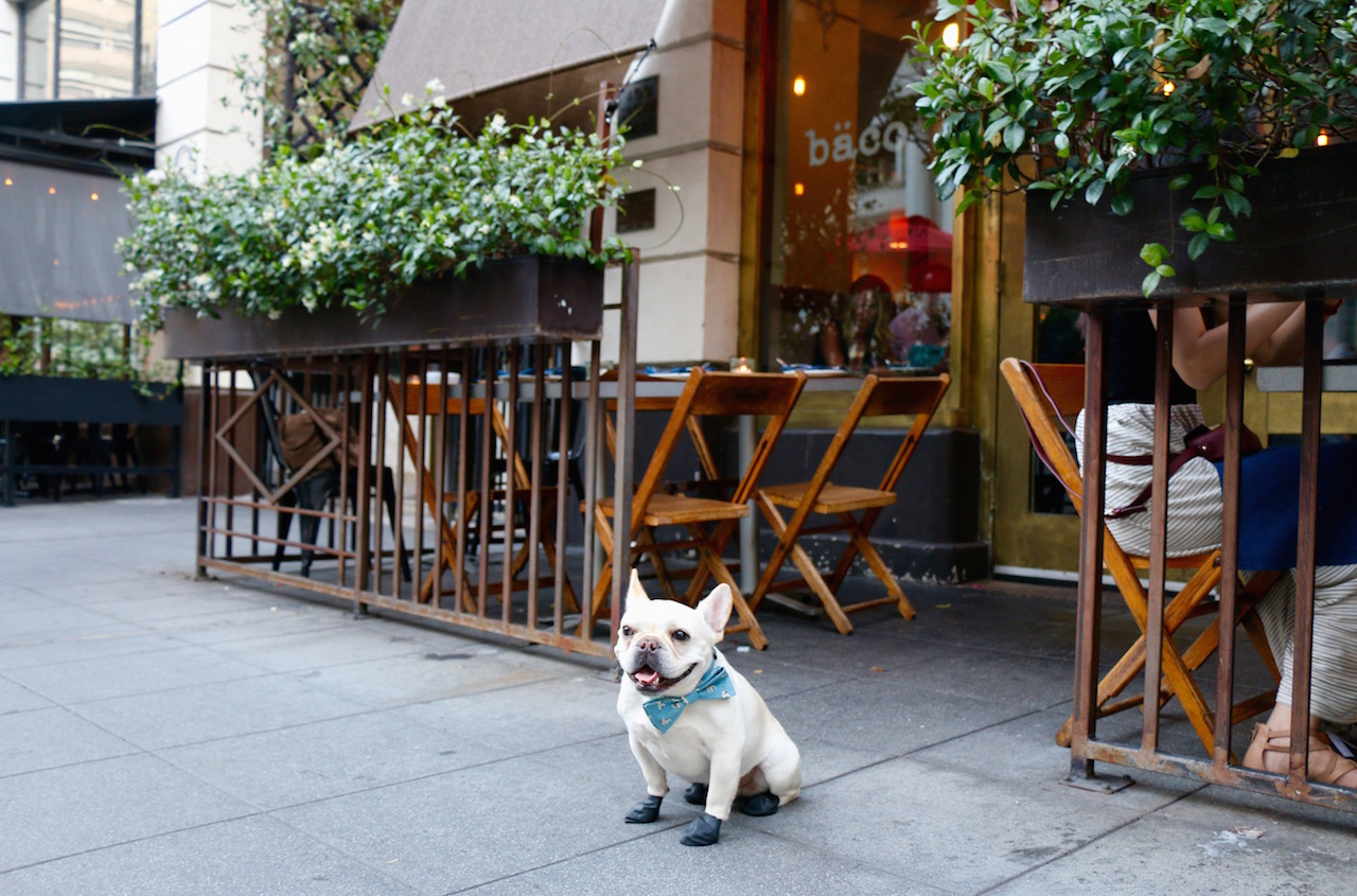 8 Dog Friendly Restaurants in DTLA - Where's The Frenchie?