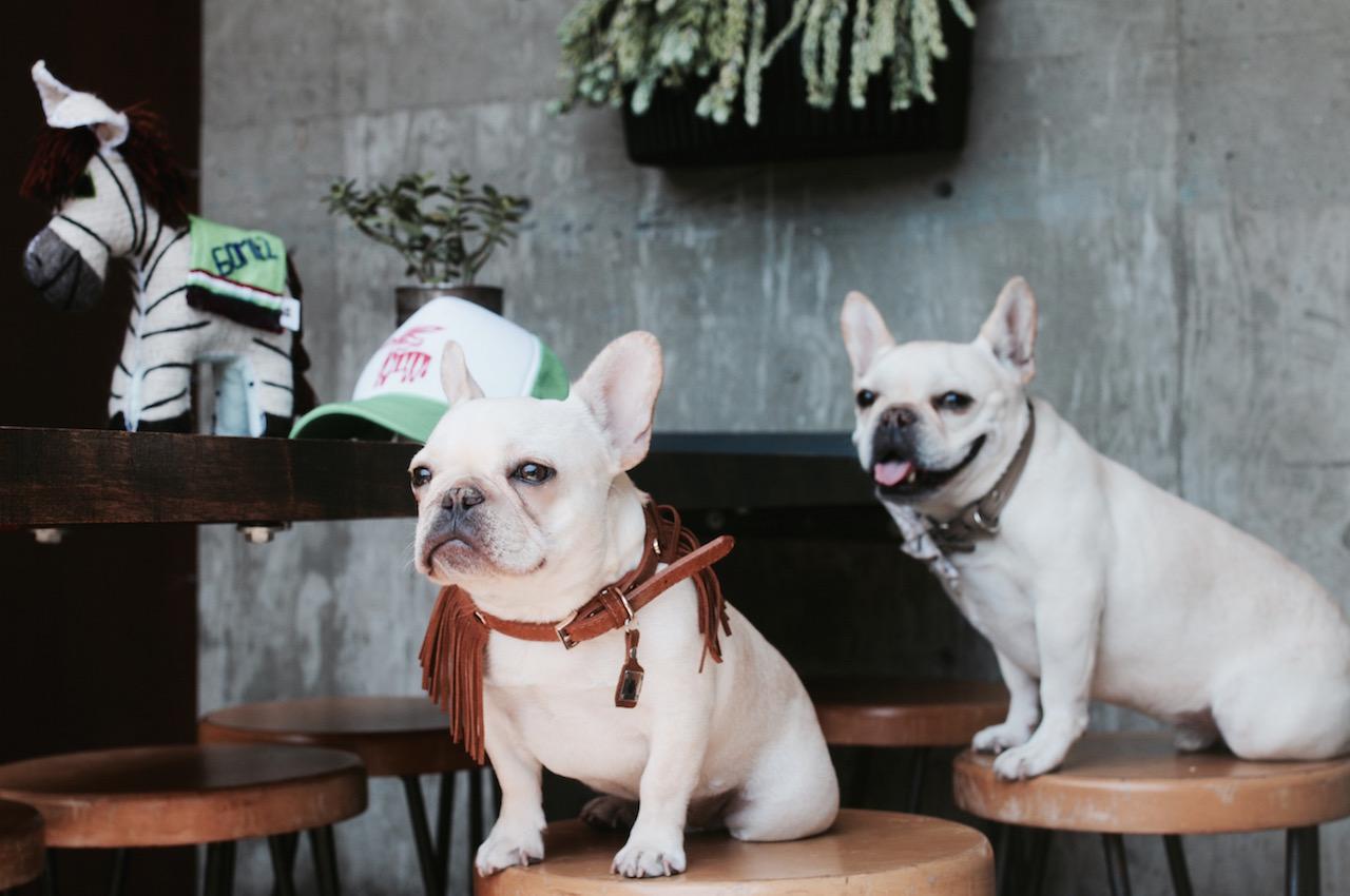 san diego dog friendly getaway