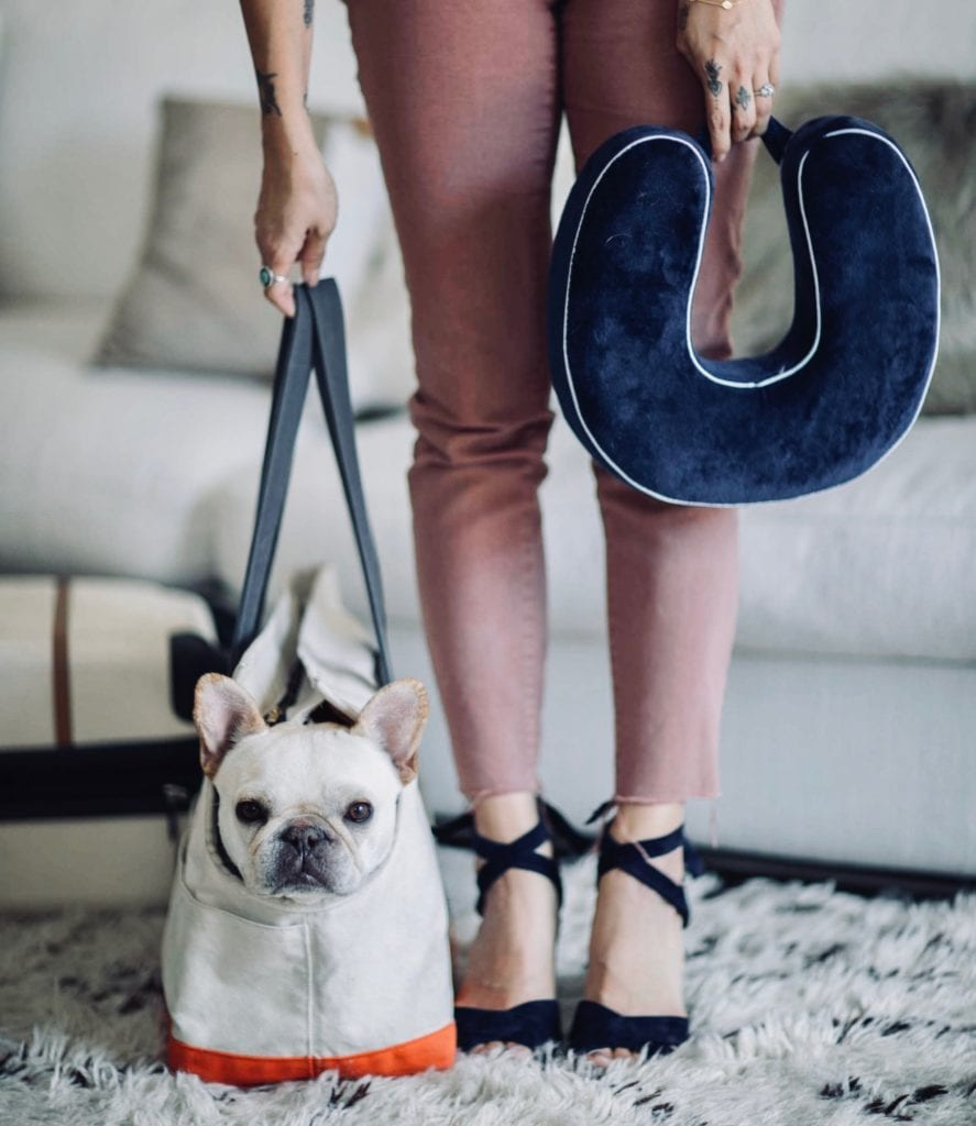 travel french bulldog