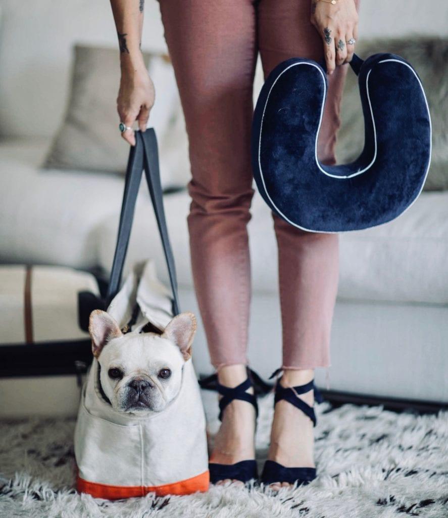 travel french bulldog