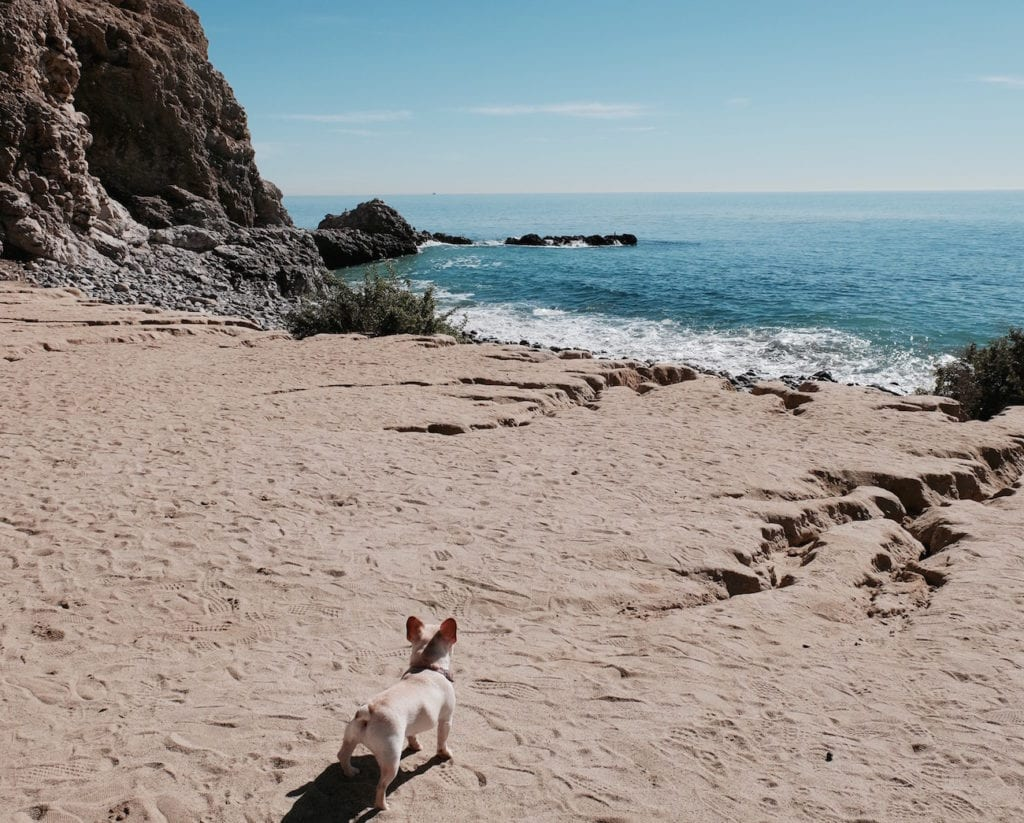 terranea dog friendly beach