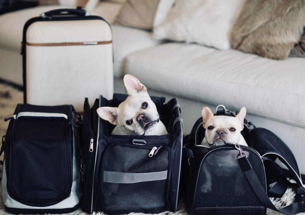 what to pack when traveling with dogs