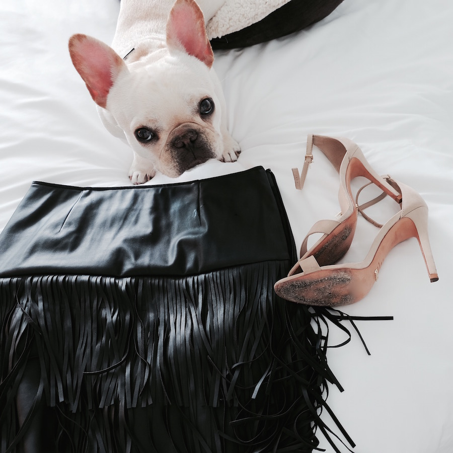 mondrian miami hotel dog friendly