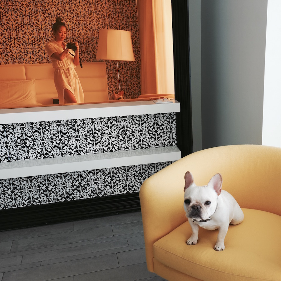 mondrian miami dog friendly