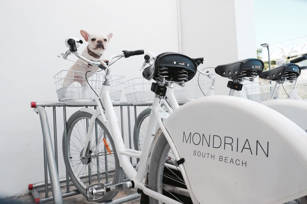 mondrian miami dog friendly hotel
