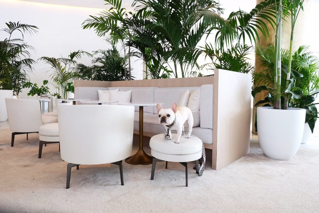 edition south beach hotel dog friendly
