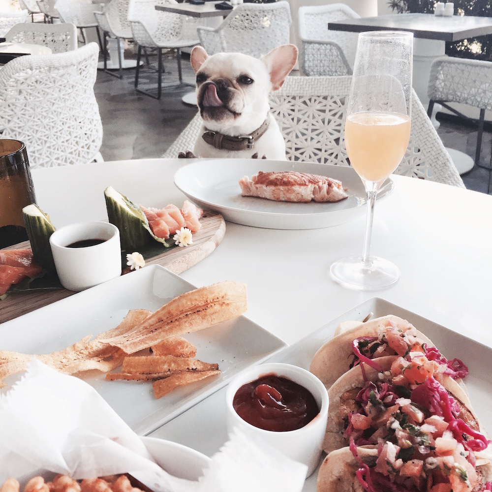 mondrian miami dog friendly lunch