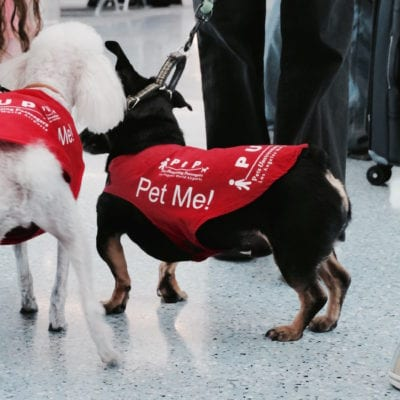 Pet Me! Therapy Dogs De-Stress Passengers at LAX