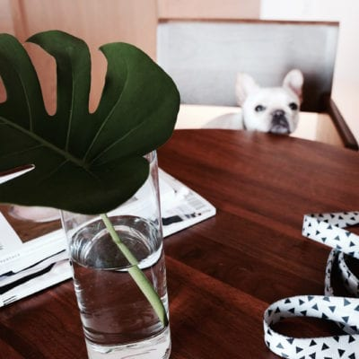 Go Eco-Friendly With Your Pup