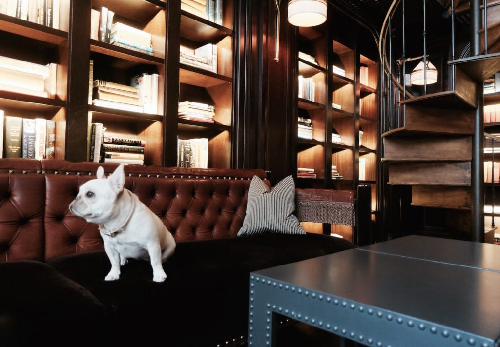 nomad hotel dog nyc