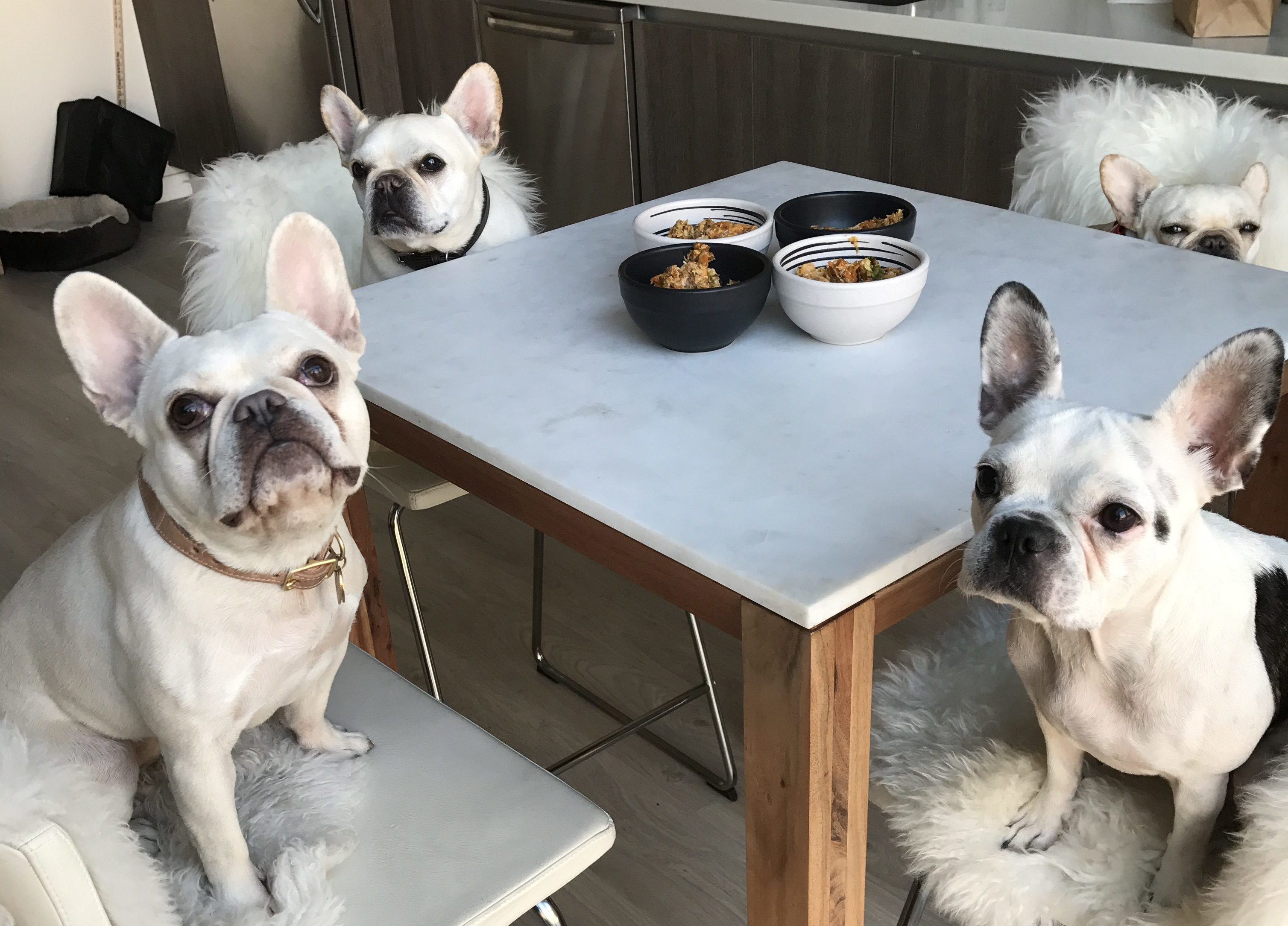 Lifestyle dog food recipes home beauty wheres the frenchie recipe salmon quinoa homemade dog food forumfinder Images