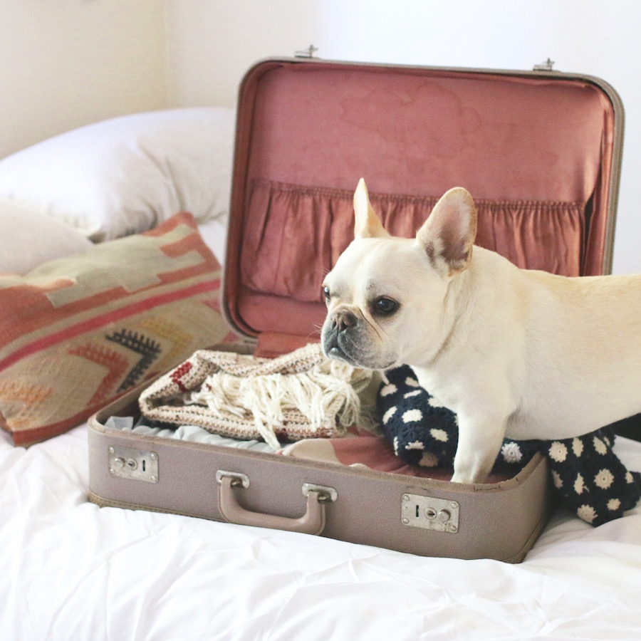 Airlines That Allow Dogs In Cabin To Paris France Where