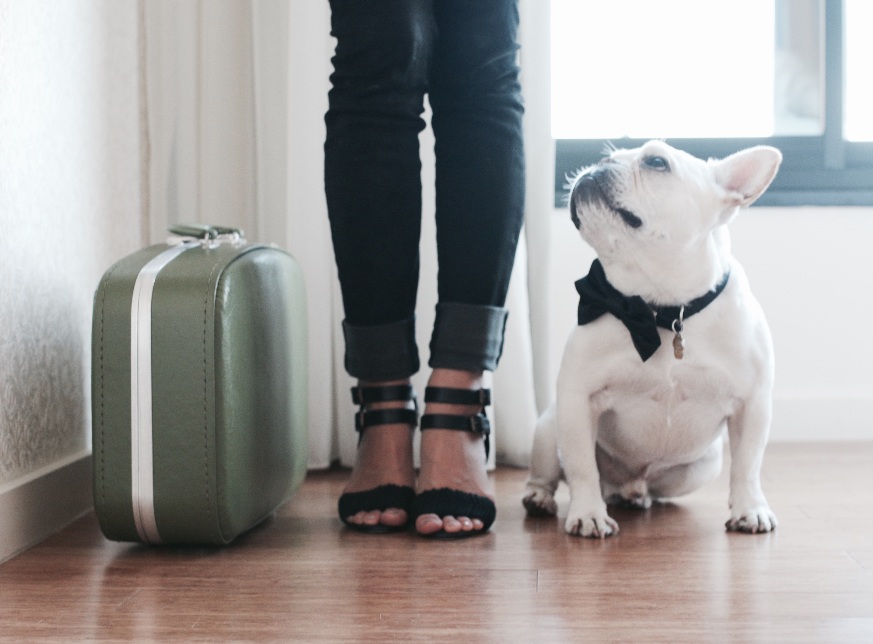 69b4842e795b Best Airline Carriers For Your Dog - Where s The Frenchie