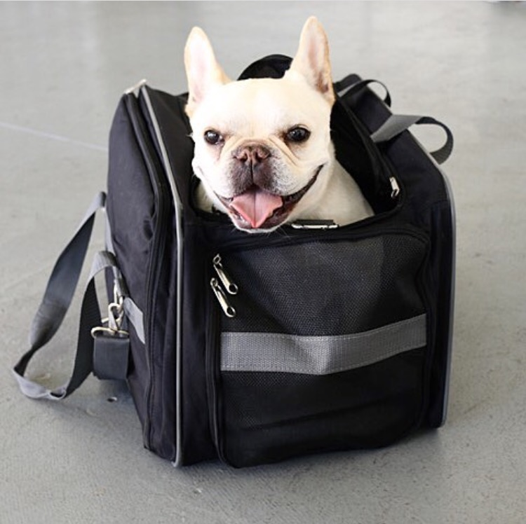 159aedadc978 Another option I found is an Amazon Basics Airline Pet Carrier (does anyone  else find it random that Amazon makes a dog carrier). It looks almost the  same