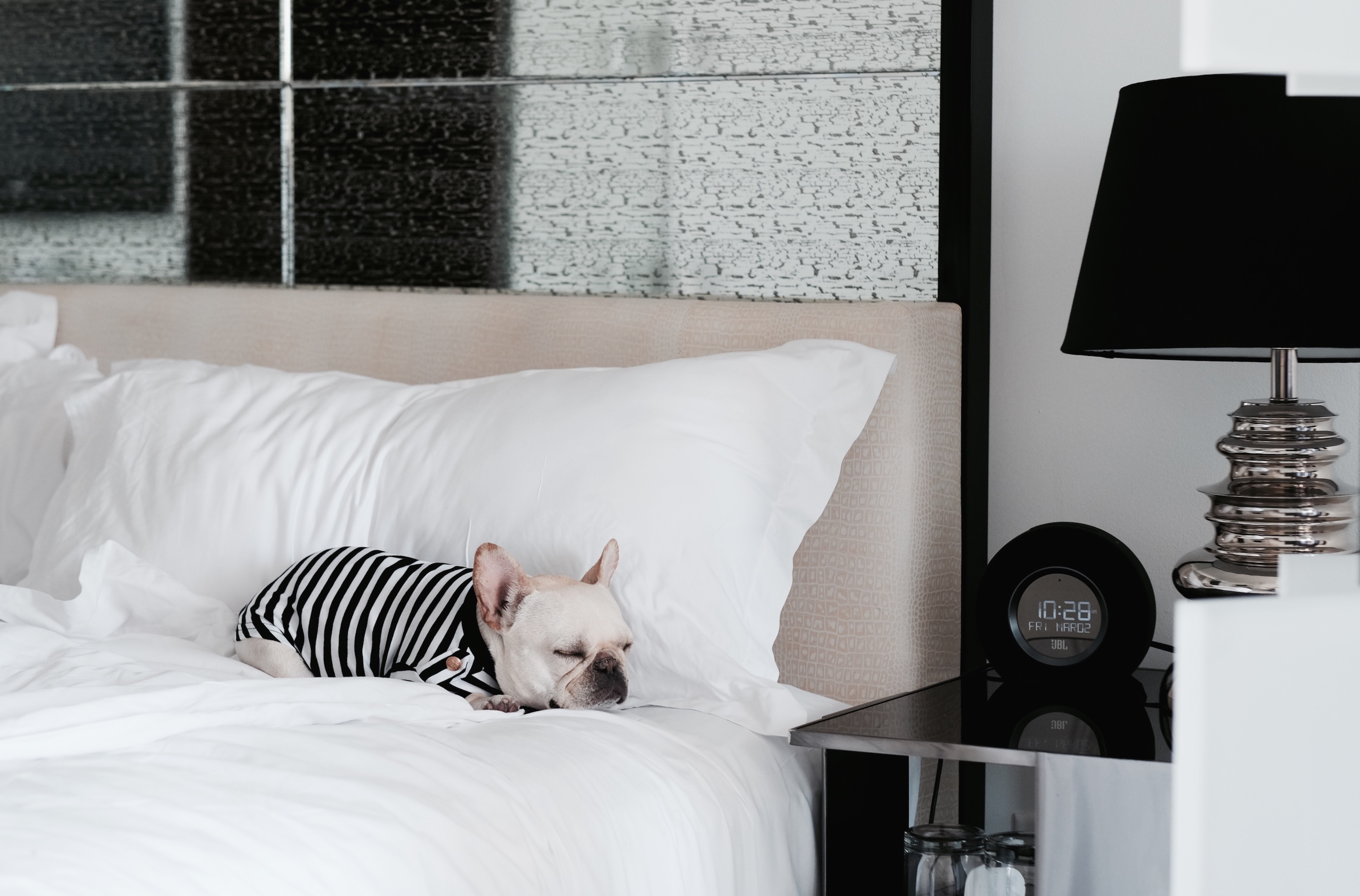 french bulldog in hotel bed