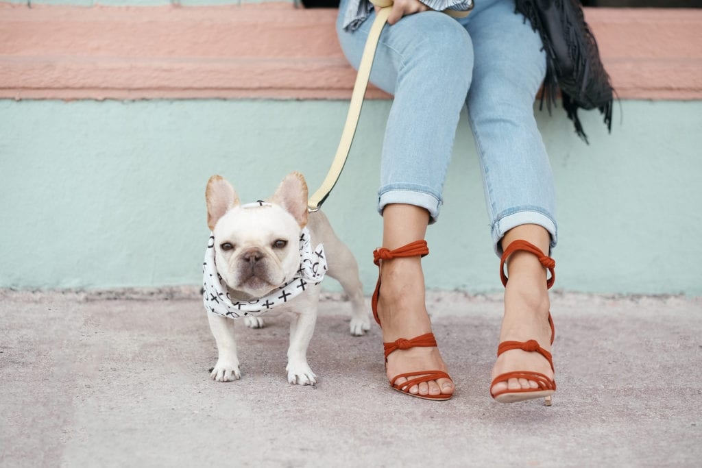 what to do in miami with dog