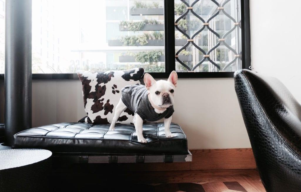 hotel zelos san francisco dog friendly