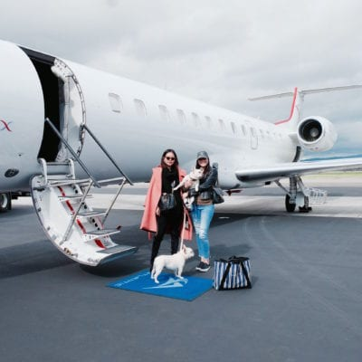 Fly Private With Your Dog For the Cost of Coach