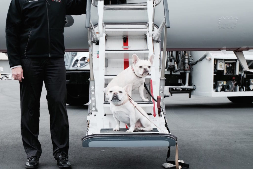 dogs fly private