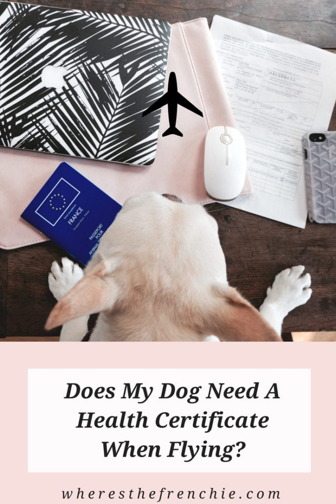 travel-blog-for-dog-owner