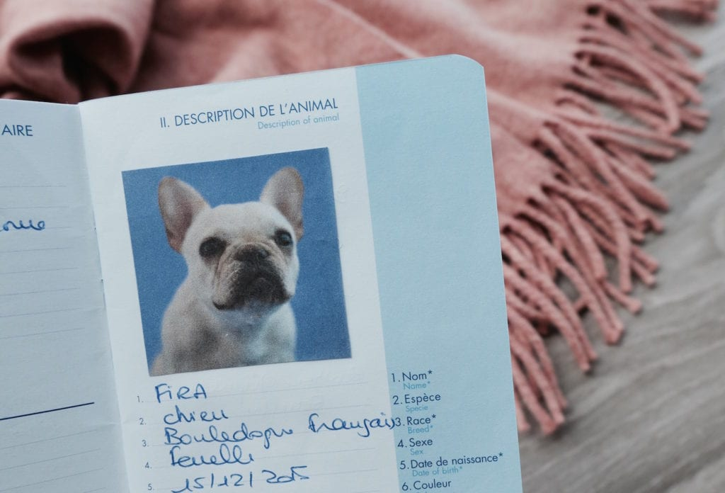 how to get a pet passport