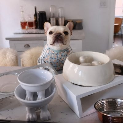 I Reviewed 6 Dog Bowls To Find The Best Dog Bowl for French Bulldogs