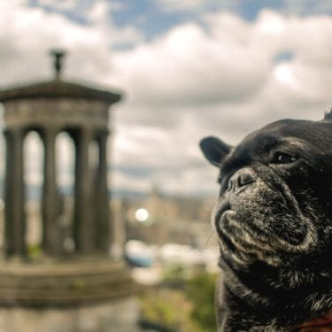 traveling scotland with dog