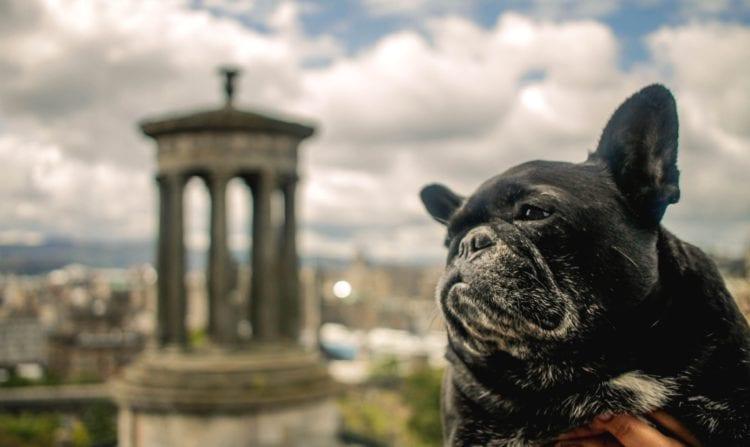 traveling scotland with dog