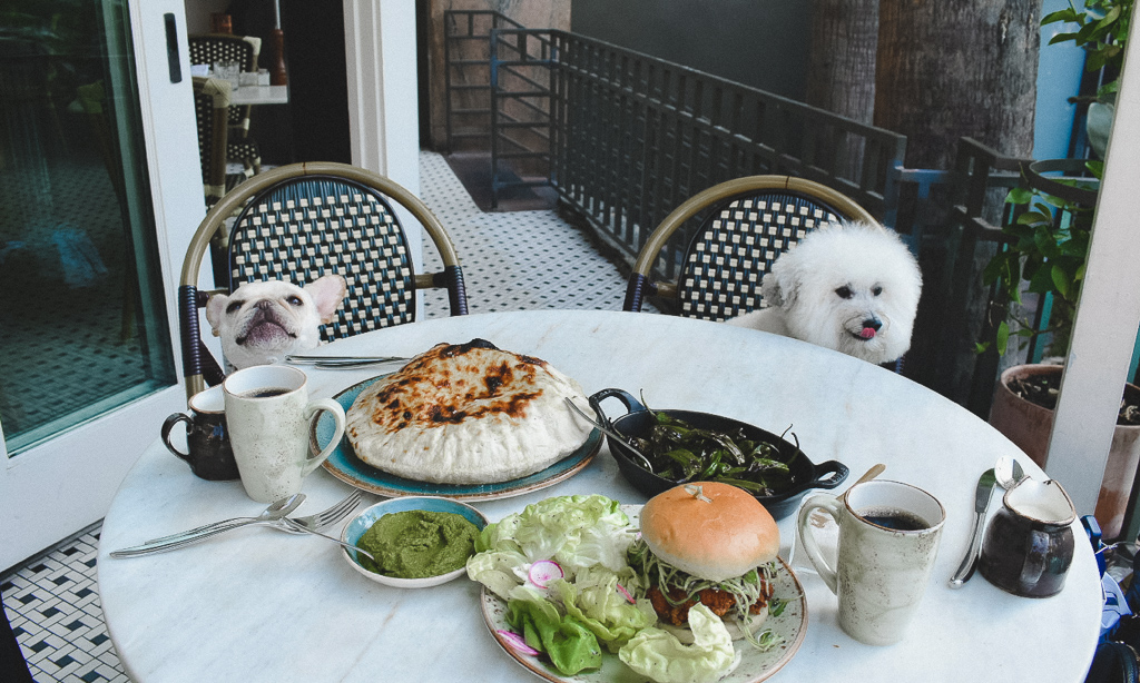 5 Dog Friendly Hotel Restaurants Not To Miss in Los Angeles