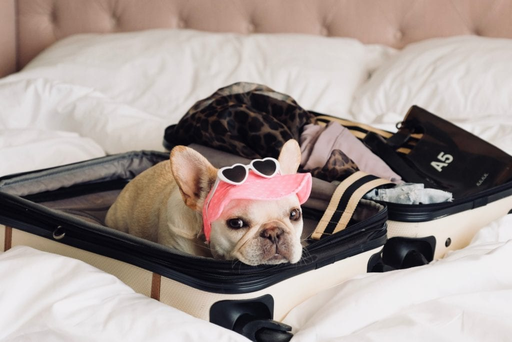 french bulldog suitcase