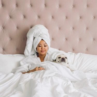 french bulldog in bed