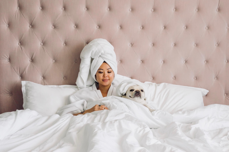 french bulldog in bed