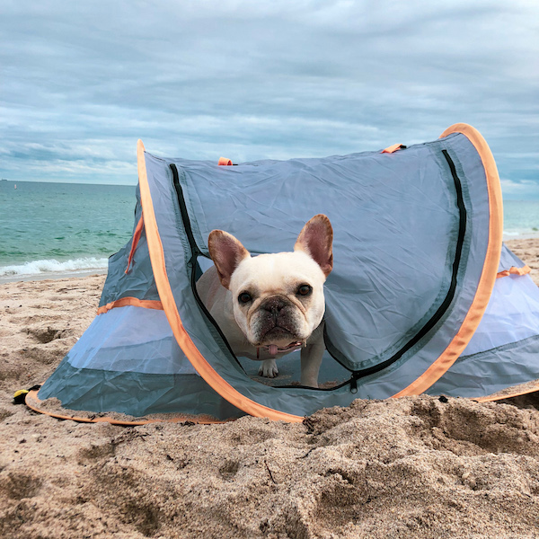 what to bring to the beach with dog
