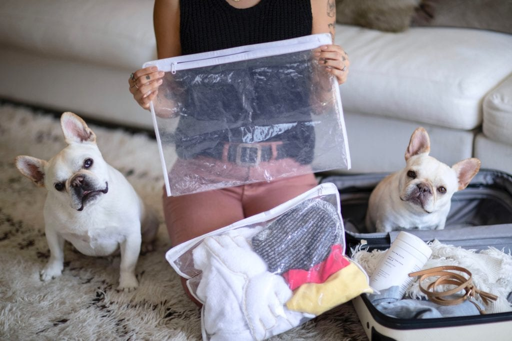 what to pack for dogs