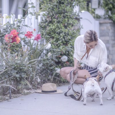 The 6 Biggest Surprises Of Owning A French Bulldog
