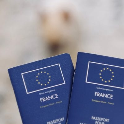 Pet Passports: Who Issues Them + What's Brexit Got To Do With It?