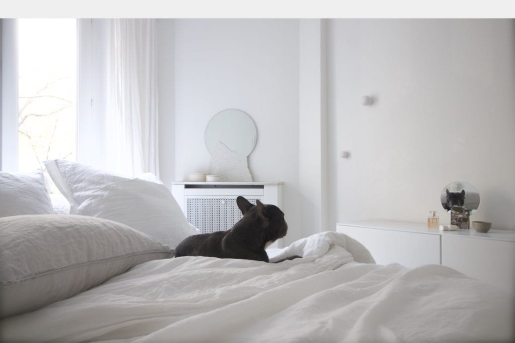 french bulldog white bed