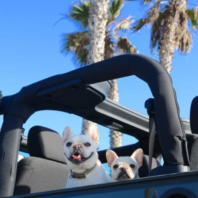 Dog Friendly Road Trip to Mendocino County