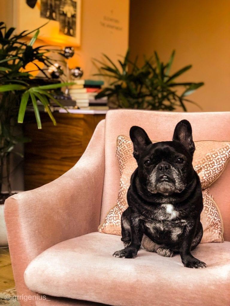 dog friendly hotel brooklyn