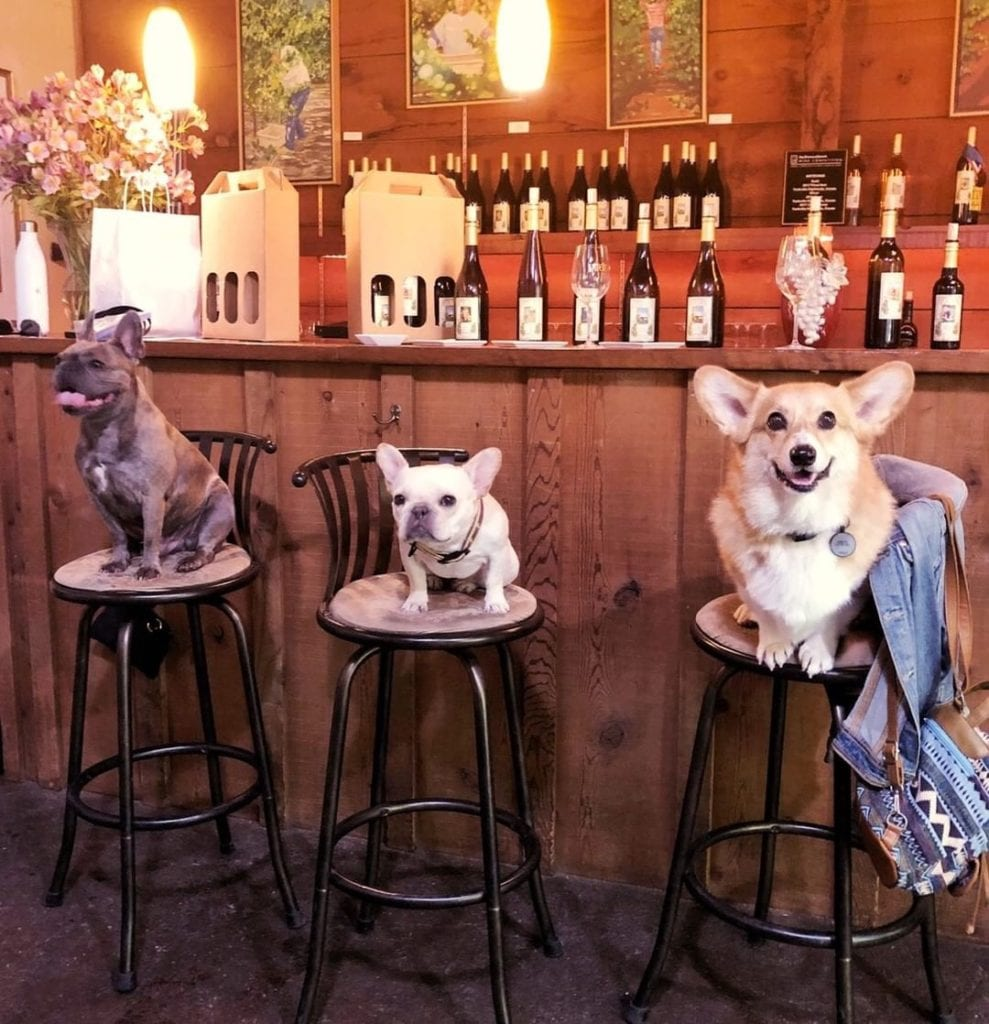 dog friendly wineries california