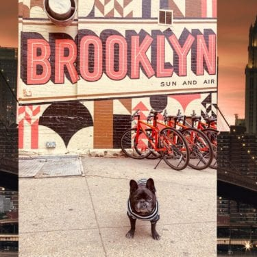 brooklyn dog friendly places