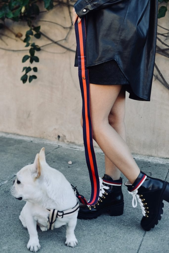 chic dog leash