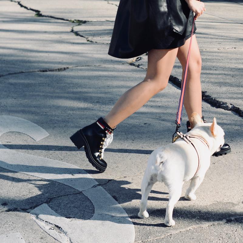 french bulldog photo