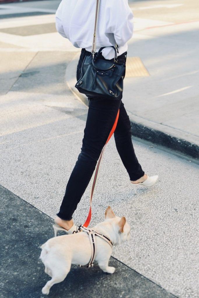 street fashion dog